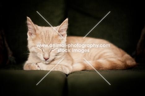 Kitten sleeping on couch
