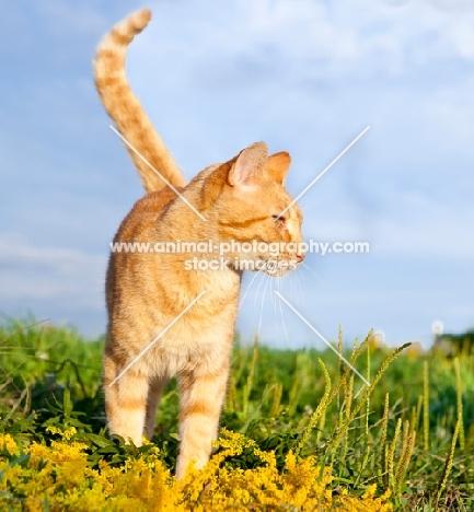 non pedigree cat in summery field