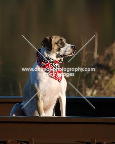 Mongrel dog sitting in boat
