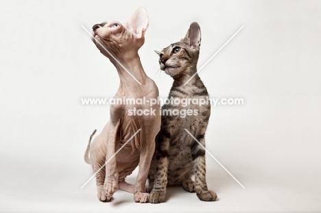 two kittens looking aside