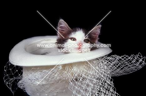 kitten in wedding hat