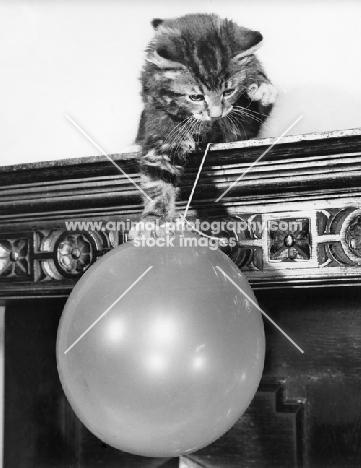 tabby kitten holding balloon