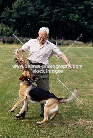 german shepherd dog, manwork