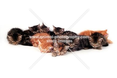 nine kittens asleep