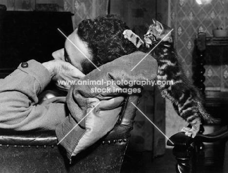 naughty tabby kitten trying to wake up a sleeping man