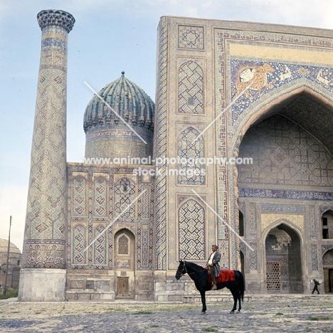 karabair stallion and rider in registan square, samarkand