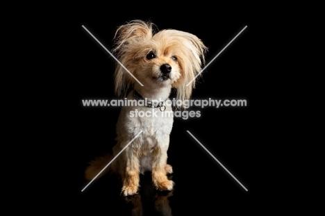 Cute dog looking into camera