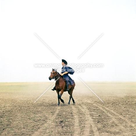 Hungarian Horse ridden by csikó on Hortobagyi Puszta