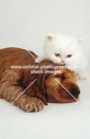sleeping puppy and kitten