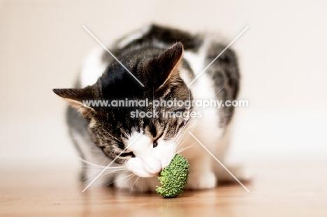 Cat eating broccoli