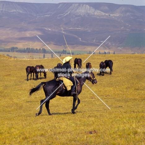Kabardines with cossack rider in Caucasus mountains