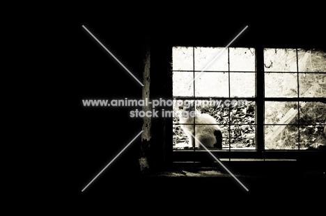cat sitting in barn window