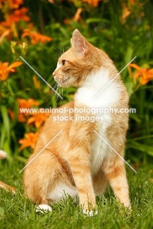 household cat sitting in garden