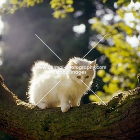orange eyed kitten on a branch, backlit