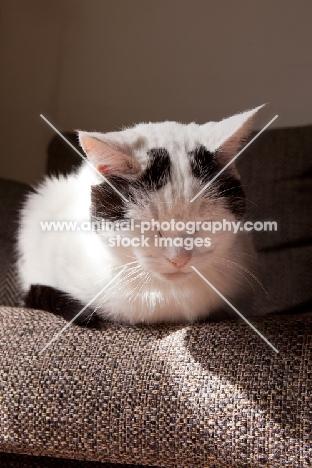 black and white cat sleeping on sofa