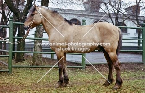viatka pony