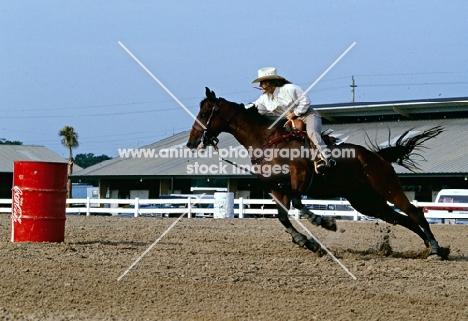 quarter horse barrel racing in usa