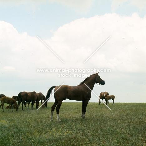 Don stallion in taboon on plains