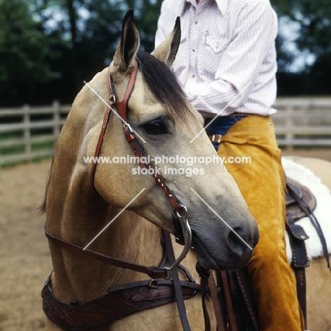 close up of quarter horse bridle