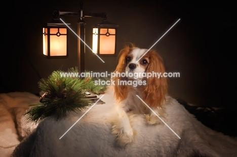 cavalier king charles spaniel with christmas scene