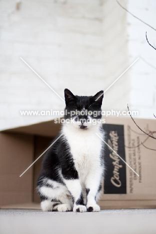 household cat near box