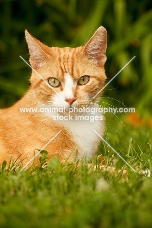 Household pet in garden