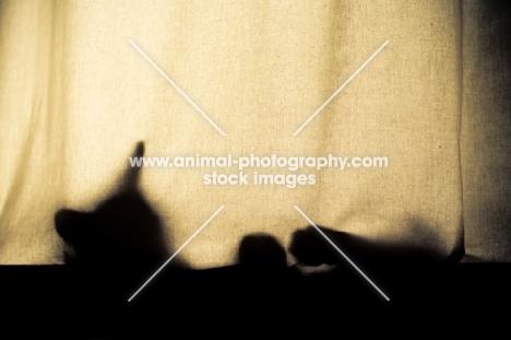 Cat sleeping in window