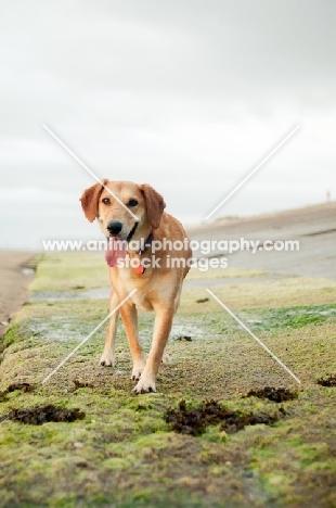 dog walking shoreline