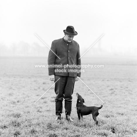 german hunt terrier, ger ch ethel vom alderhorst, looking up at her owner