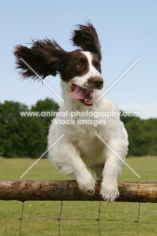 Animal Photography   E...