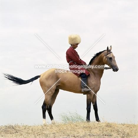 polotli, famous akhal teke stallion,  turkmen rider in traditional clothes