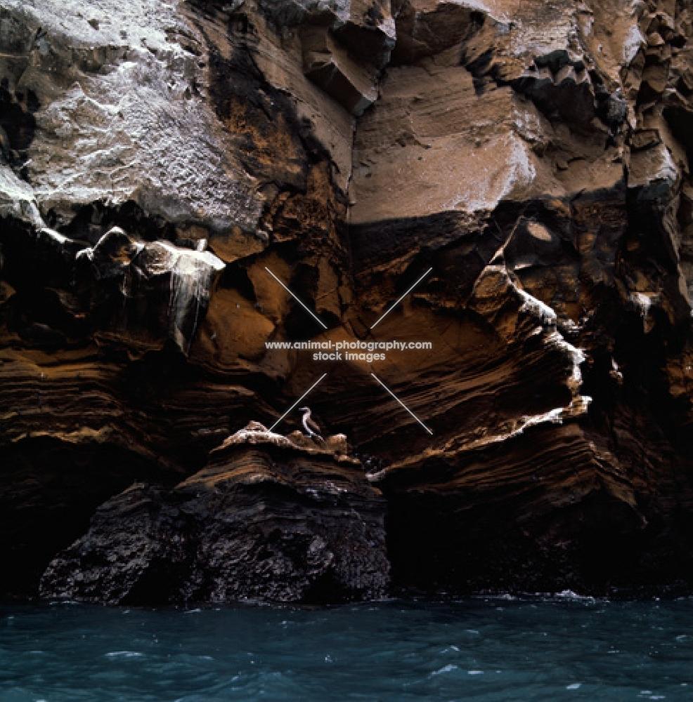 sea birds at roca vincente, galapagos islands
