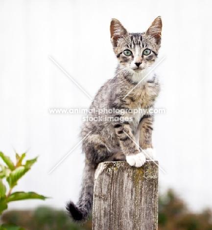 kitten sitting on a pole