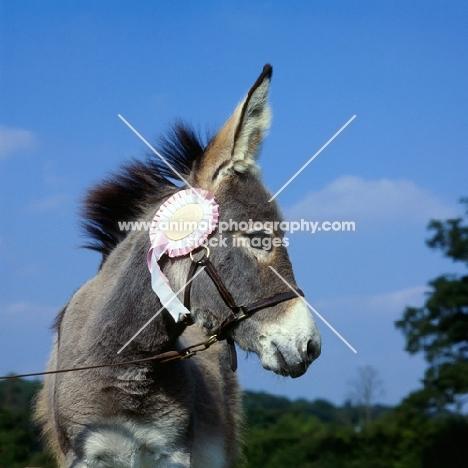 winning donkey with rosette