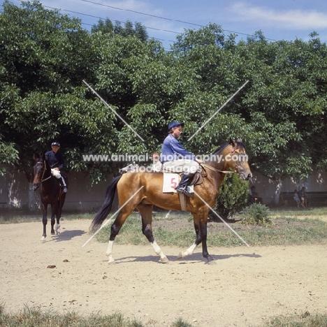 akhal tekes with lady jockeys at racecourse