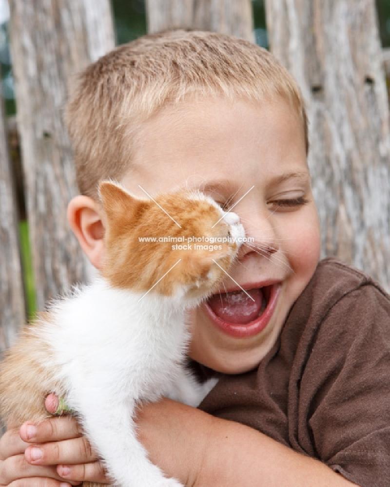 kitten kissing a boy