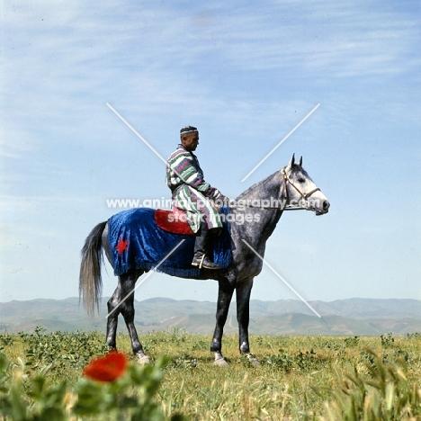 karabair stallion and rider in uzbekistan