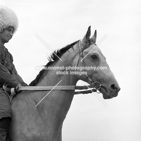 Polotli, akhal teke stallion with Turkmen rider