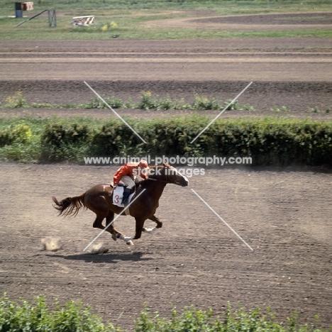 akhal teke racing in russia