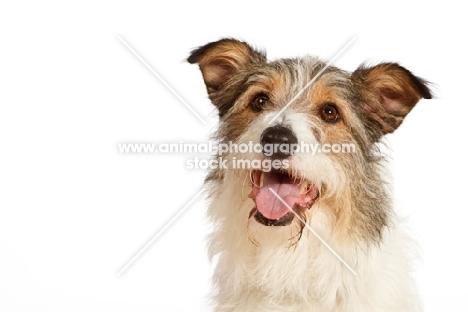 mixed breed dog looking up