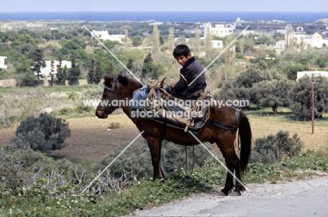 child riding working skyros pony on skyros island, greece