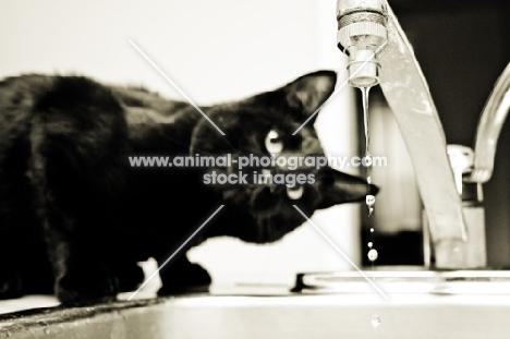 black cat watching tap