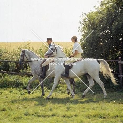 two riders on Shagya Arab horses walking through field in denmark
