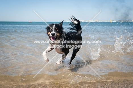 dog running on shoreline