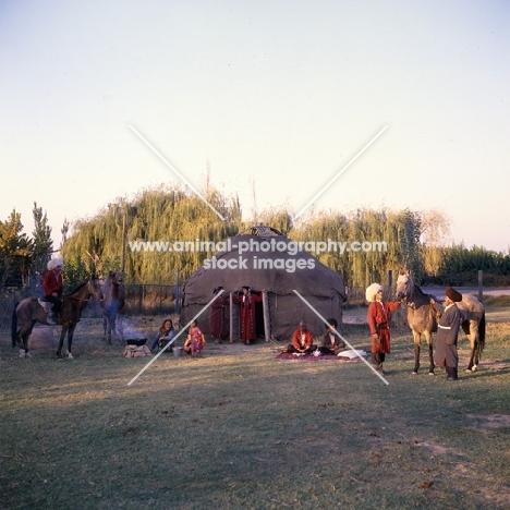 akhal teke horses amongst a turkmen community