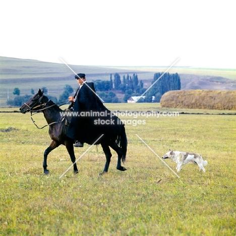 Cossack riding Kabardine horse with dog in Caucasus