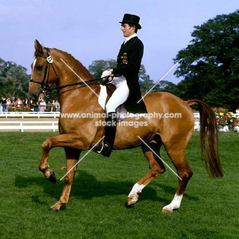uwe schulten-baumer riding slibovitz, piaffe during their parade, dressage at goodwood 1980