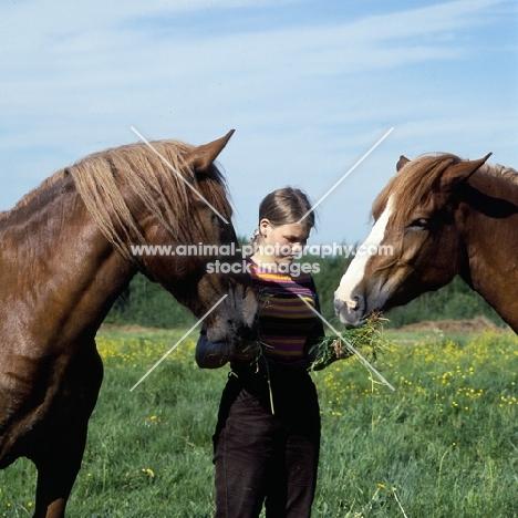 girl feeding grass to two Finnish Horses