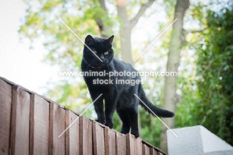 black cat on fence