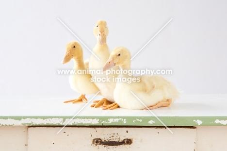 three Peking Ducklings (aka Long Island duck) on a table